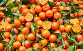La grande scommessa del limonene, il pesticida naturale ricavato dalle bucce di arance.