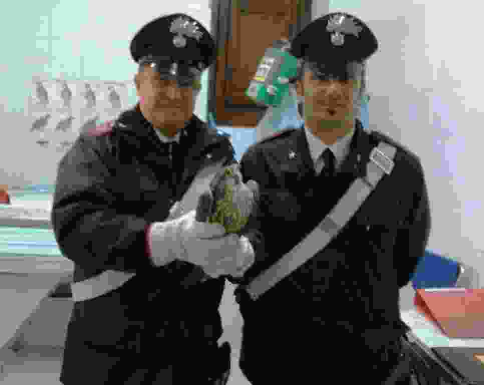 BAUCINA: FALCO PELLEGRINO SALVATO DAI CARABINIERI