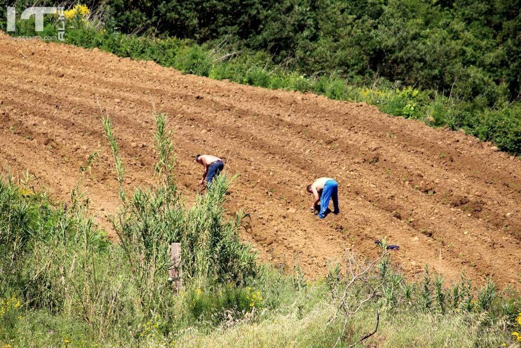 Lavoratori dei campi.
