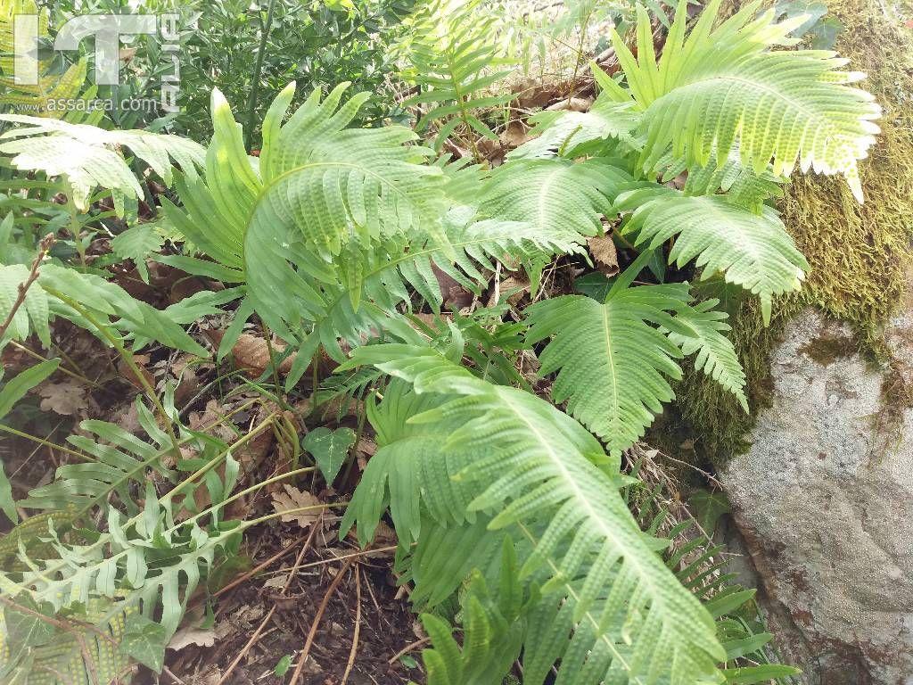 Sottobosco natura piante ed animali for Piante da sottobosco