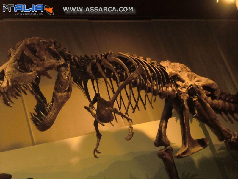scheletro di un dinosauro