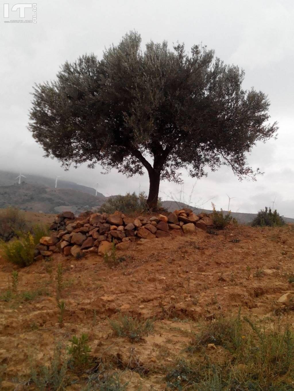 L`albero della vita