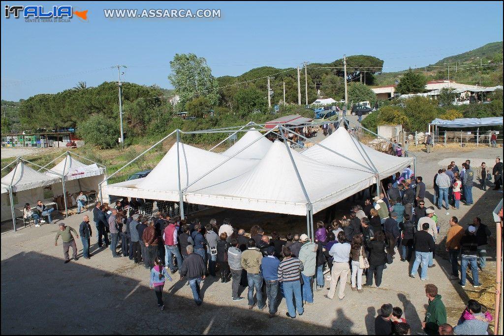 Sicilialleva edizione anno 2013