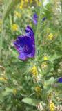 fiore spontaneo 1