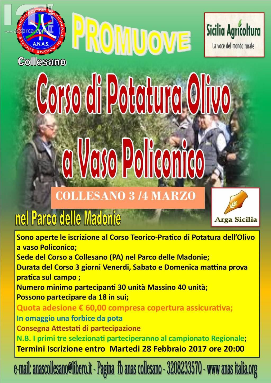 Corso di potatura olivo a vaso Policonico - Collesano 3 - 4 marzo 2016