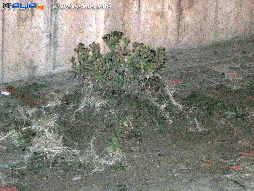 Alia 20 maggio 2016,Via Garibaldi far cadere un vaso a terra risolve tutto?