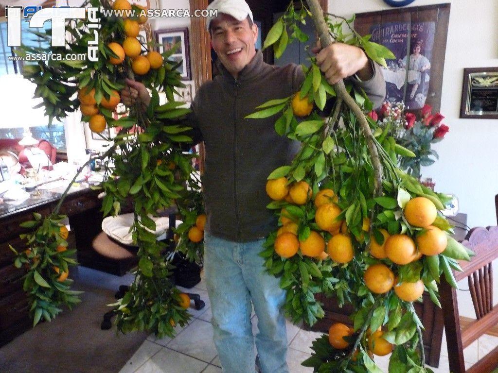 Aiutato dall`amico Frank Bellipanni abbiamo raccolto alcune arrange del mio giardino.