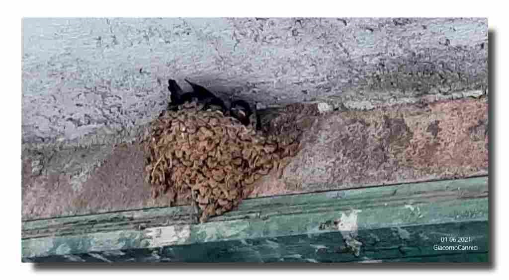 Una rondine al tetto