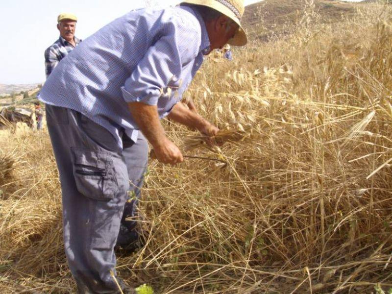Palermo. Si parla del ciclo del grano al Corso sui Beni Etno antropologici
