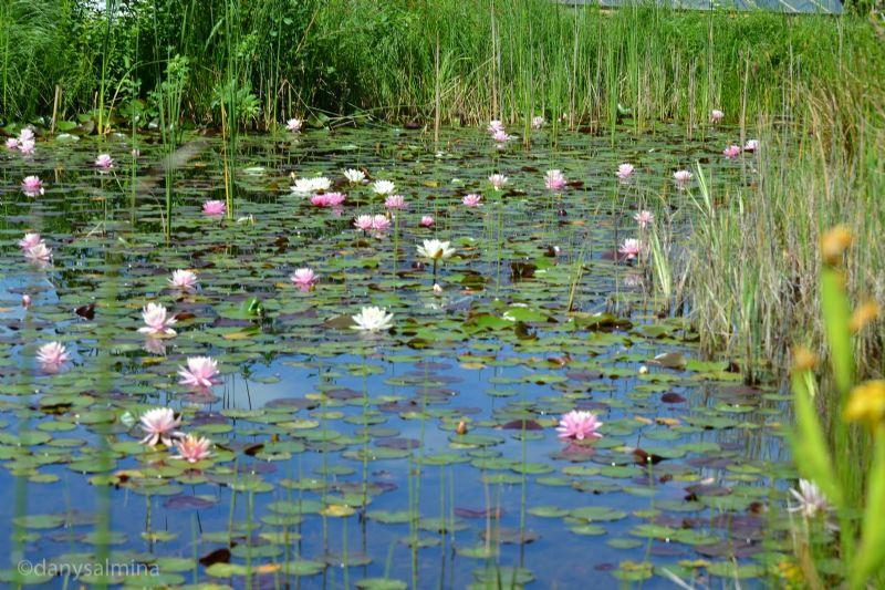 Visita guidata al lago Bomes a Montemaggiore Belsito