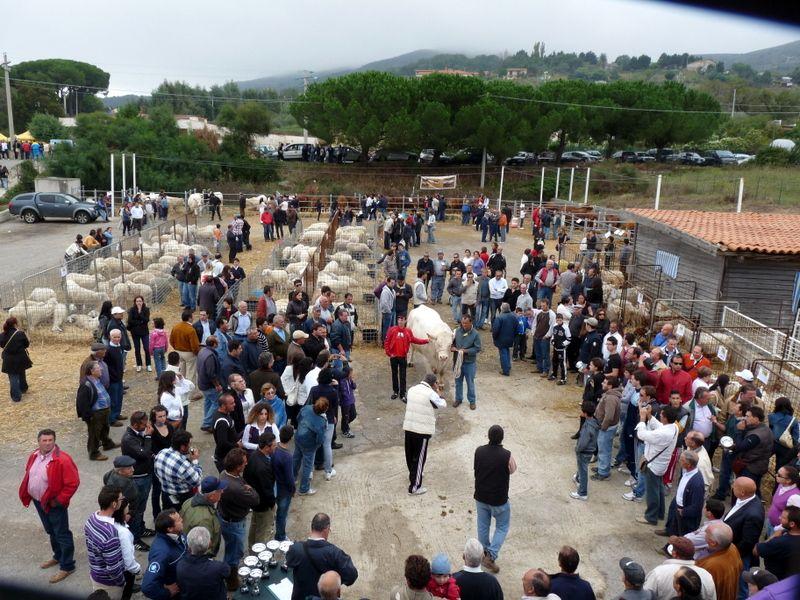 Alia     Grande successo SiciliAlleva 2010
