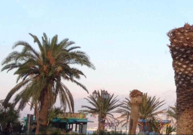 Termini Imerese Salviamo le palme del Belvedere. Proposta delle associazioni BCsicilia e La casa di Stenio per adottare le piante