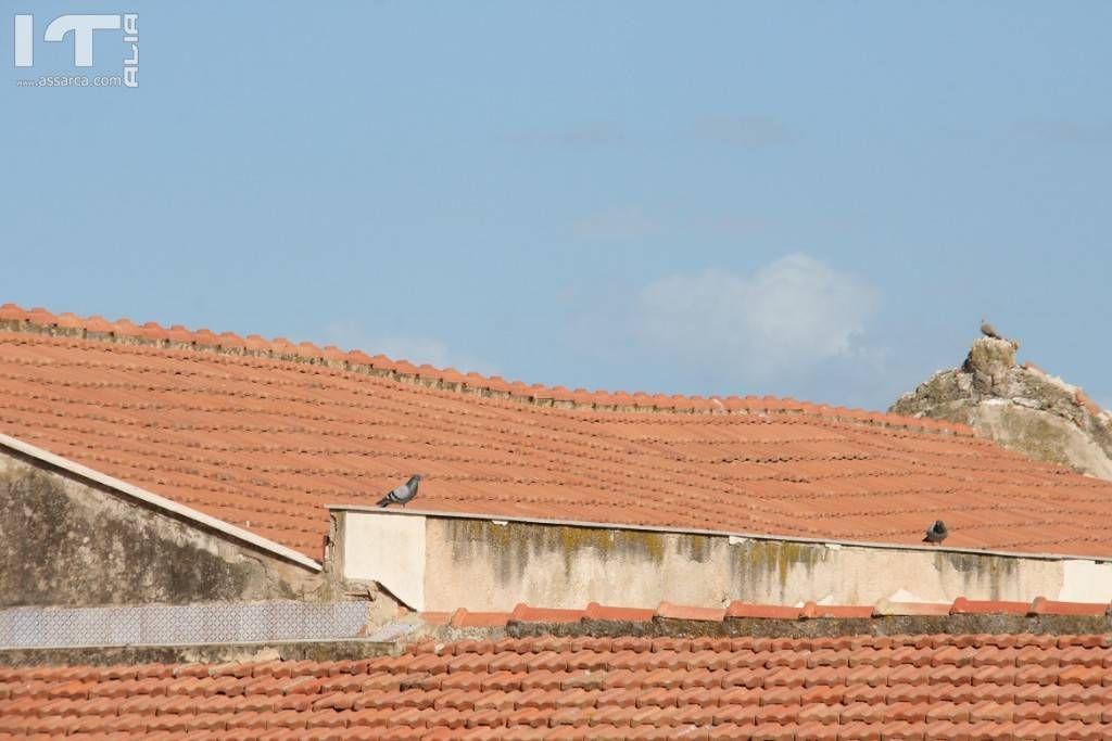 Termini Imerese, a rischio crollo il tetto dell�ex Collegio dei Gesuiti di via Roma: la denuncia delle Associazioni BCsicilia e Casa di Stenio