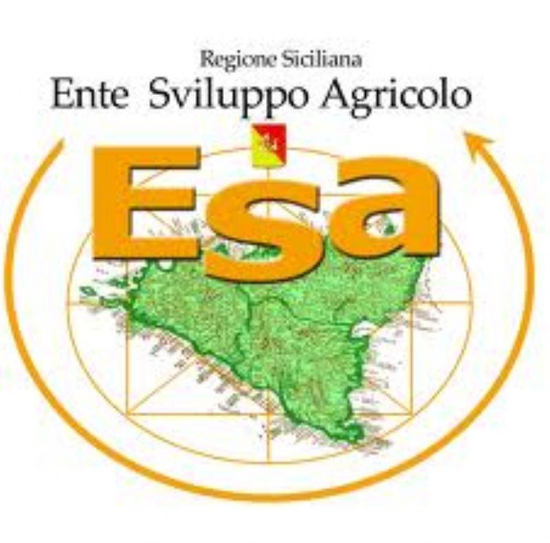 Concorso Regionale �Morgantìnon� degli Oli Extravergini d�Oliva Siciliani  IV edizione 2013