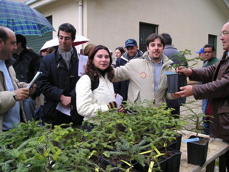 Affidate alla cura della comunit? aliese due rari esemplari di abete delle madonie (Abies Nebrodensis)
