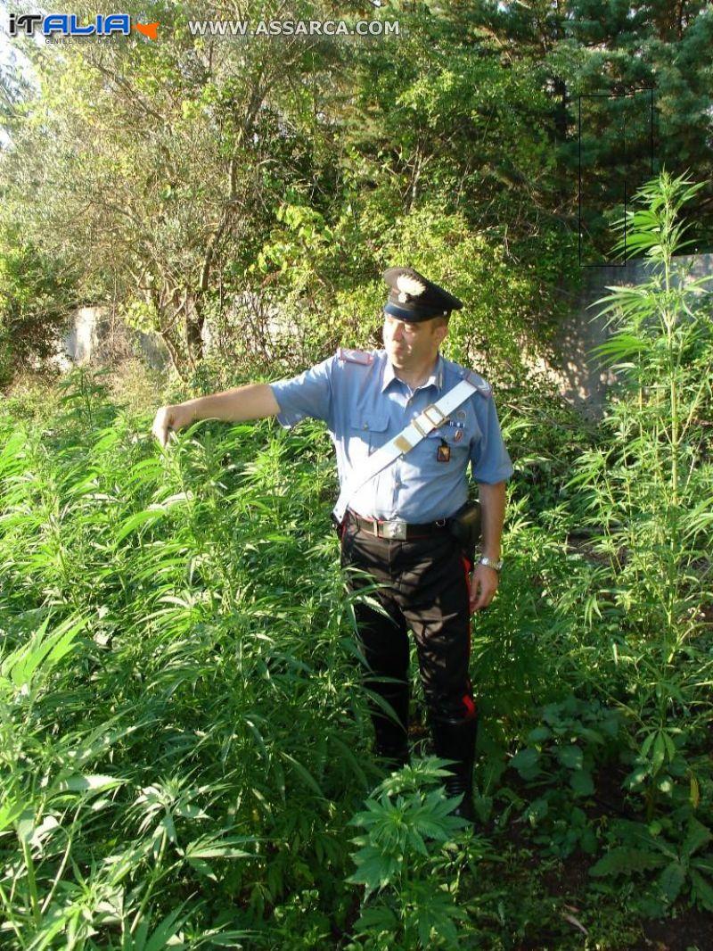 CARINI (PA) - Scoperta dai carabinieri una piantagione di cannabis
