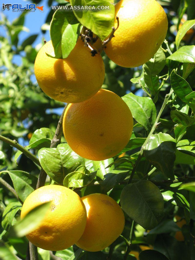 succcose arance