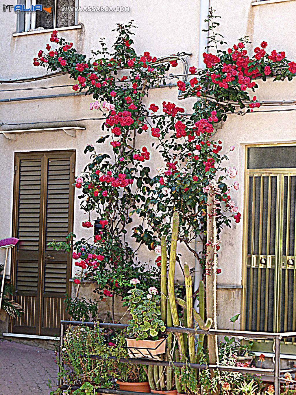 Le rose di Via Solito
