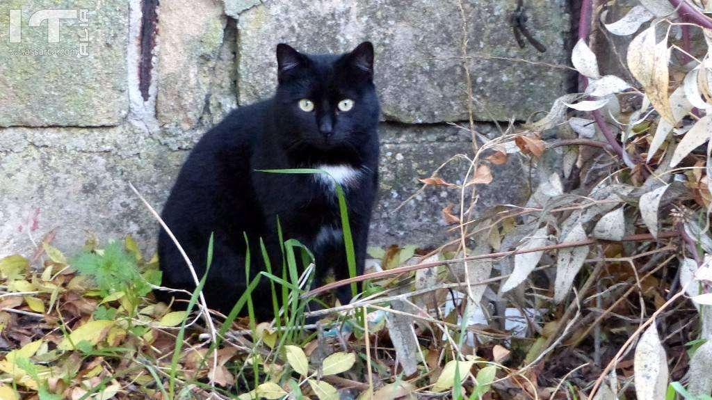Avevo un gatto nero