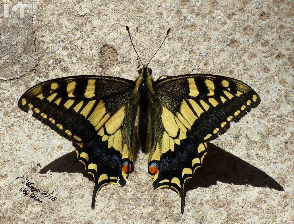 A caccia di farfalle